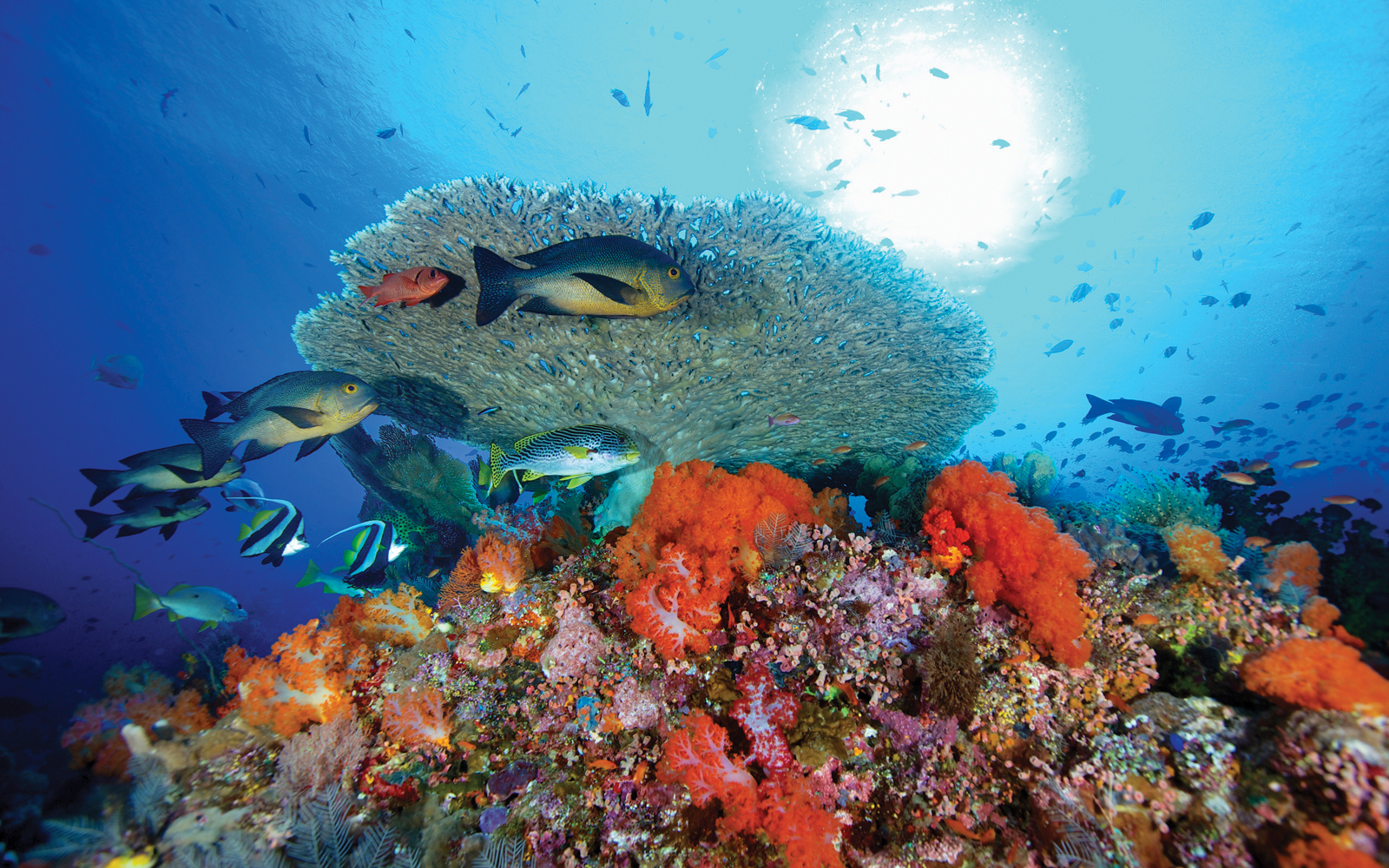 Bloomberg Philanthropies' ocean conservation efforts help protect marine life in coral reefs like this one off the coast of Indonesia.
