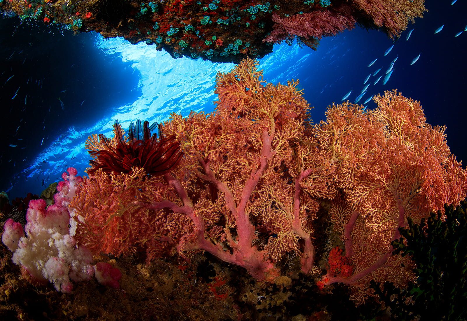 Coral reef off the coast of Indonesia.